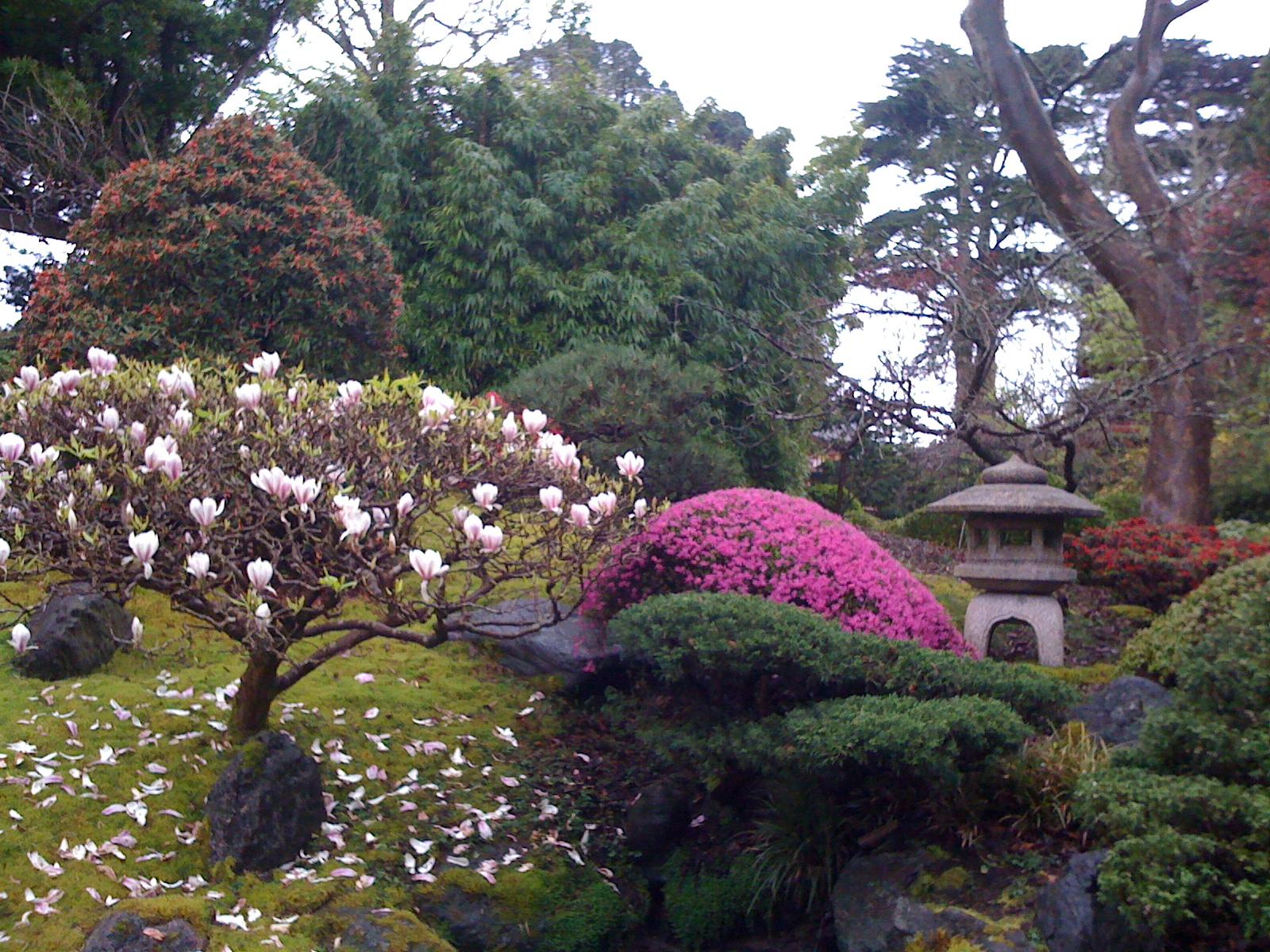 Japanese Tea Garden In Full Bloom Golden Gate Park Views From
