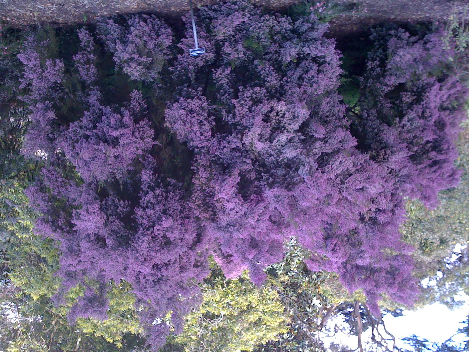 Low growing flowering shrubs bed mattress sale for Low growing flowering shrubs