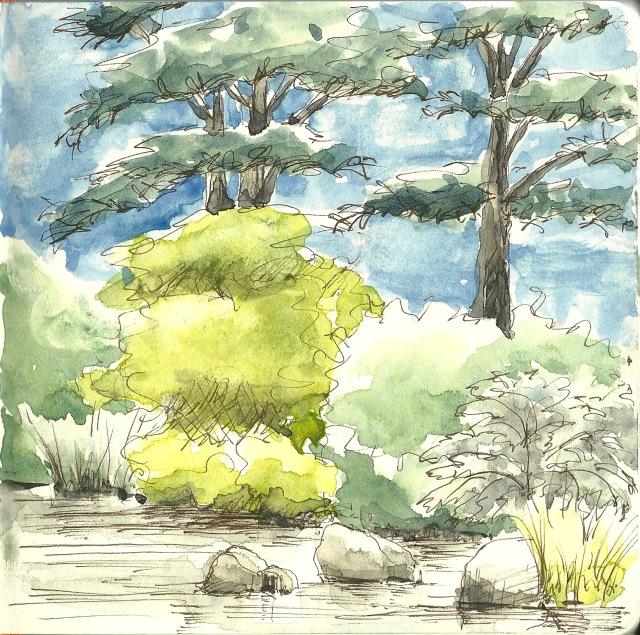 A pond in the botanical garden (sketch by Heath Massey)