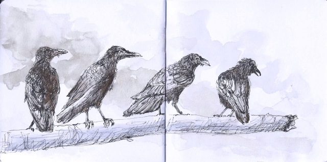Four ravens in Golden Gate Park (sketch by Heath Massey)
