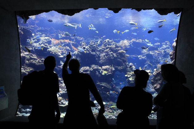 Visitors watch the fish in the Coral Reef Exhibit in Steinhart Aquarium, a model green building. (Photo: Michael Short, The Chronicle)