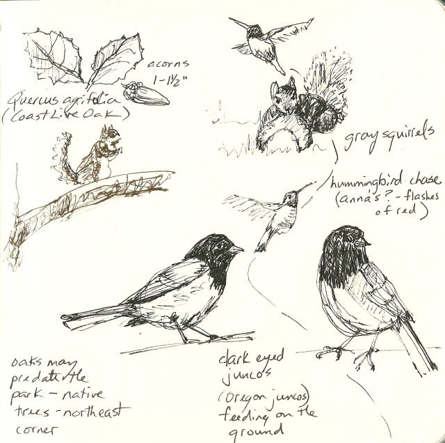 Nature journal, oak woodlands, Golden Gate Park (Heath Massey)
