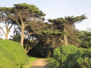 cypresses.print