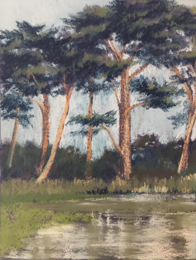 Cypresses at Metson Lake